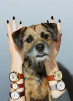 086 Still Life Product Photographer Dennis Pedersen Watches Fashion Dog Hands Nails Advertising Editorial Creative